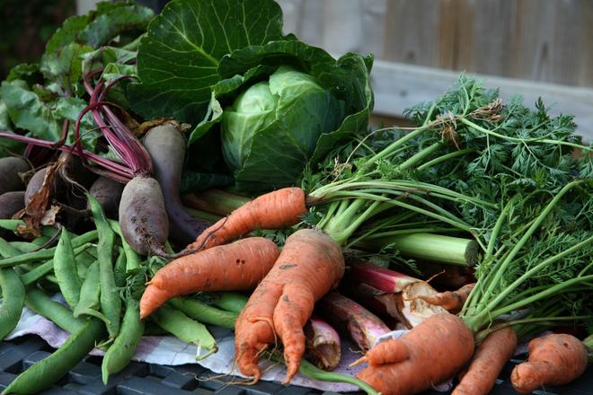 organic-vegetables-1575751